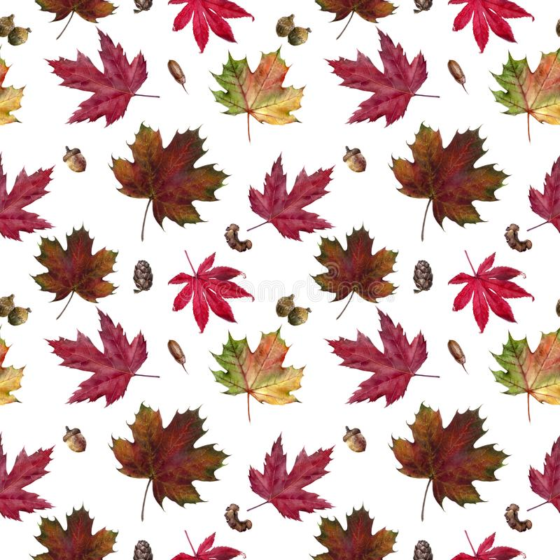 Watercolor hand drawn autumn leaf isolated seamless pattern. Seamless autumn pattern with autumn leaf maple, acorn, bark. Hand drawn watercolor illustration stock illustration