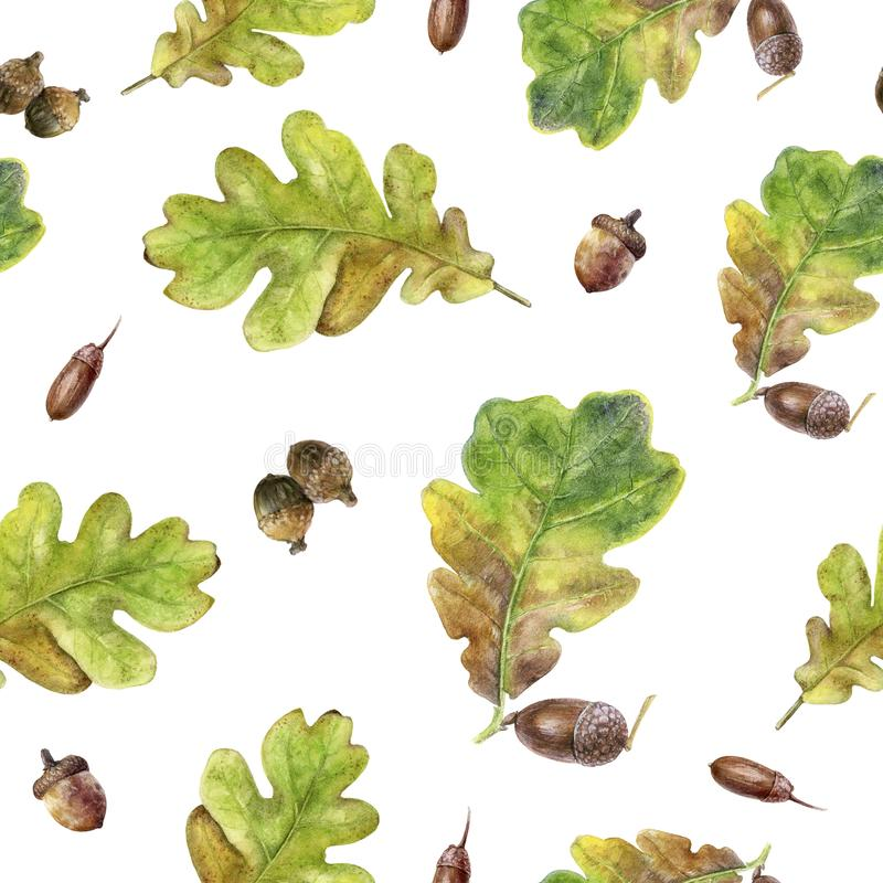 Watercolor hand drawn autumn leaf isolated seamless pattern. Seamless autumn pattern with autumn leaf oak, acorn. Hand drawn watercolor illustration vector illustration