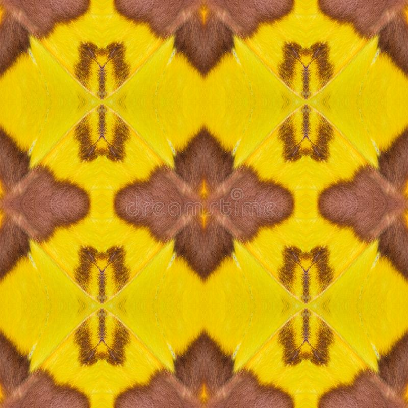 Background created from moth wings. Seamless background created from part of Malaysian moon moth Actias maenas wings, texture showing minute scales stock image