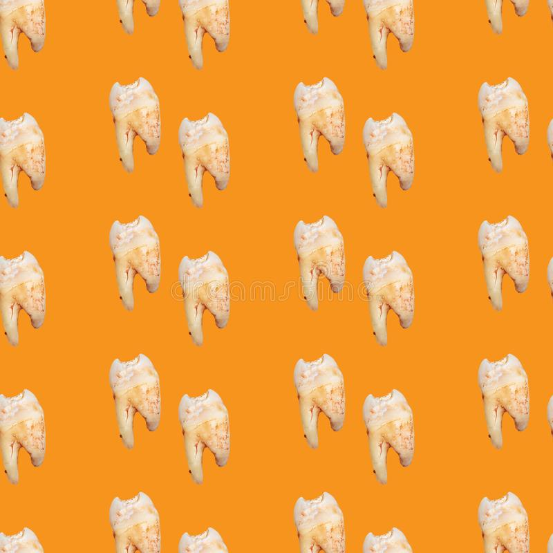Seamless background with real torn teeth on yellow color. Seamless pattern with real torn teeth on yellow color, dental, tooth, medicine, medical, health royalty free stock image