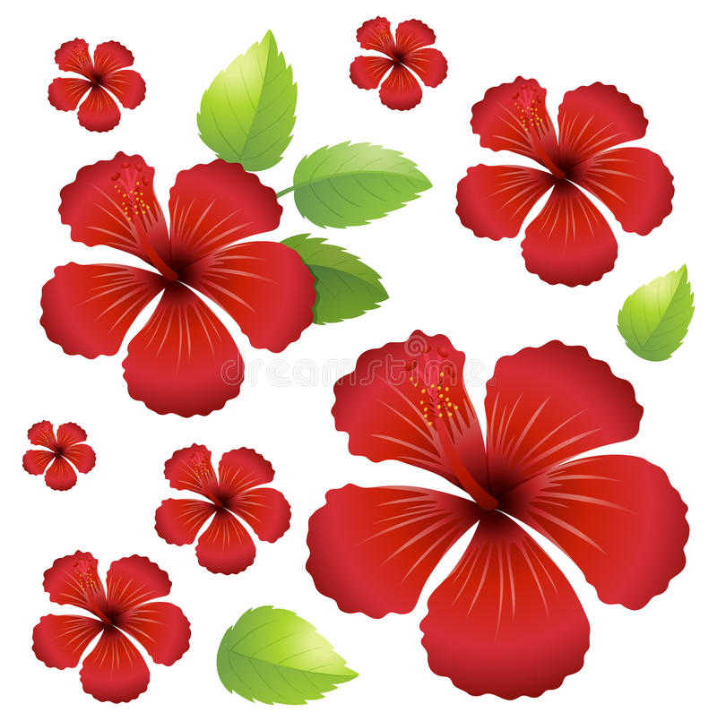 Seamless background with red hibiscus flowers royalty free illustration