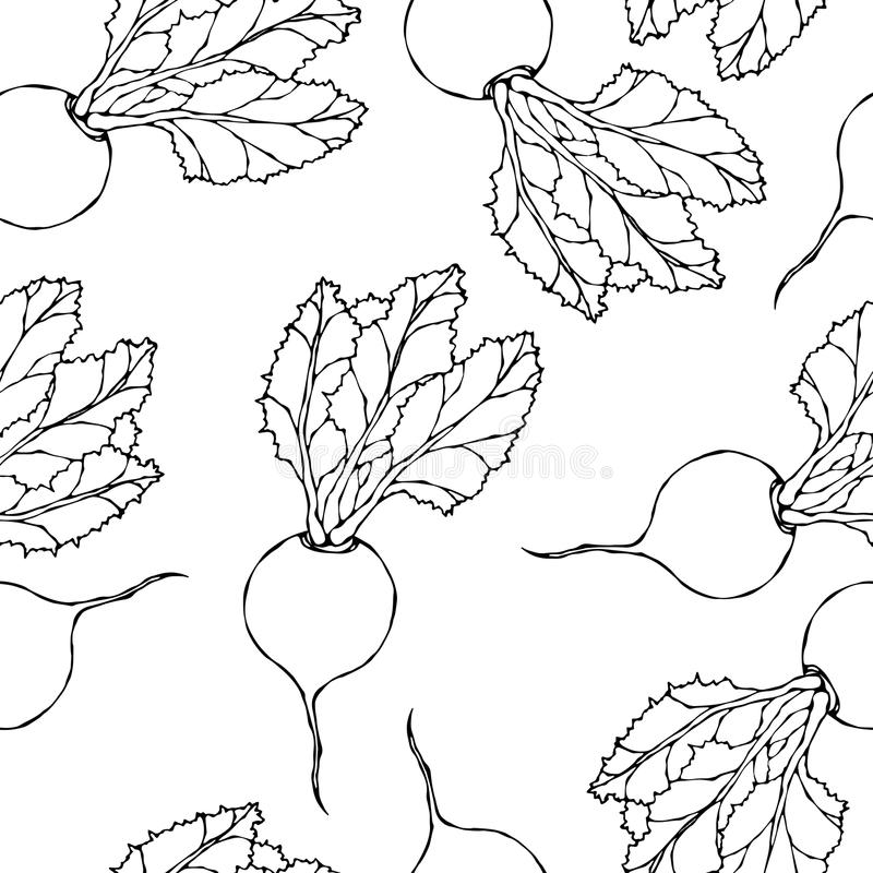 Seamless Background of Ripe Beets. Endless Pattern of Beetroot with Top Leaves. Fresh Vegetable Salad. Hand Drawn Vector Illustrat. Ion. Savoyar Doodle Style royalty free illustration