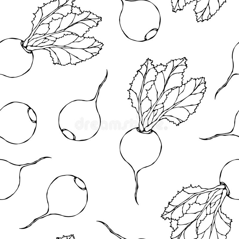Seamless Background of Ripe Beets. Endless Pattern of Beetroot with Top Leaves. Fresh Vegetable Salad. Hand Drawn Vector Illustrat. Ion. Savoyar Doodle Style stock illustration