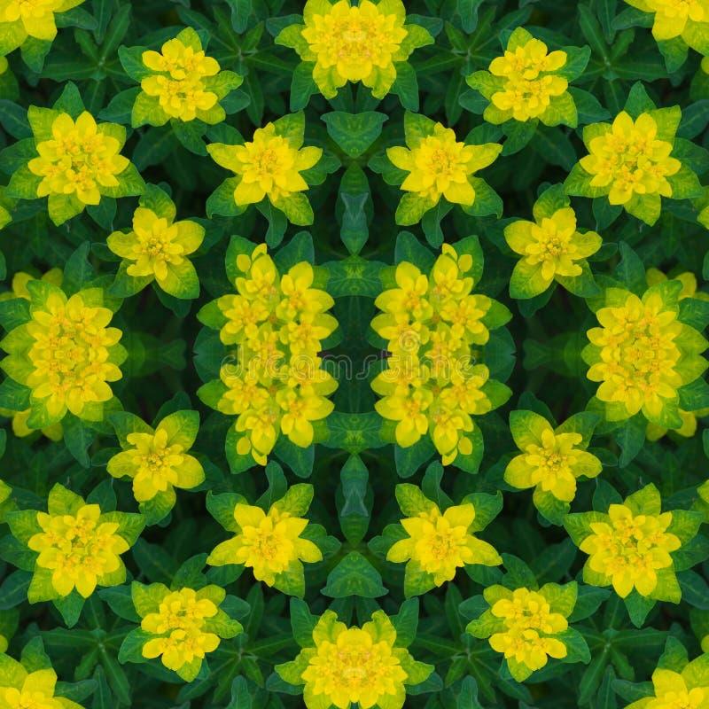 seamless blom- modell Abstrakt blom- bakgrund, prydnad Ljus gul blommatextur Euphorbiaepithymoides eller kudde royaltyfri fotografi
