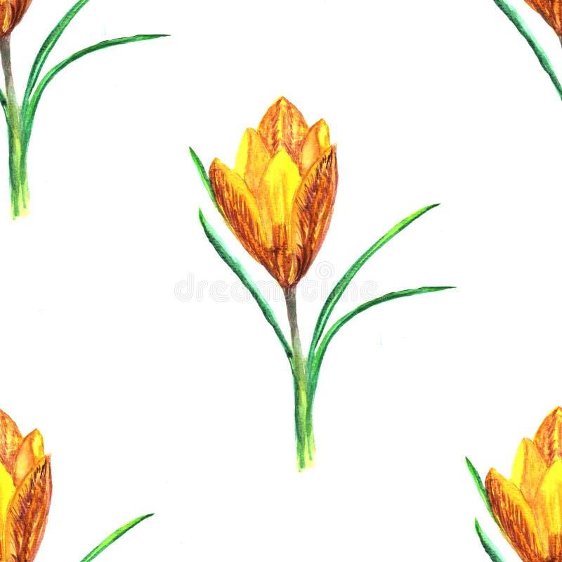 seamless blom- modell Blomma för vattenfärgkrokusvår stock illustrationer