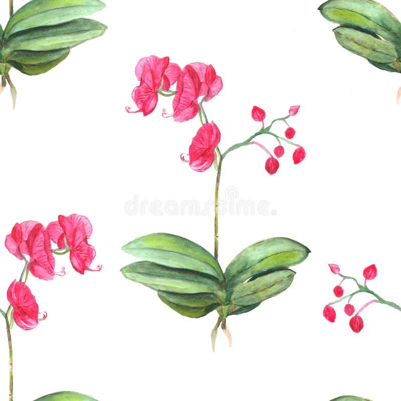 seamless blom- modell botanisk bakgrund Vattenfärgillustration av den rosa blomman för orkidé royaltyfri illustrationer