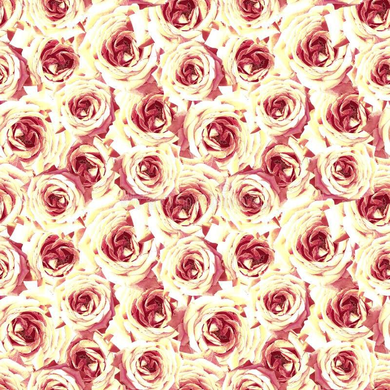 seamless blom- modell Gula röda rosor stock illustrationer