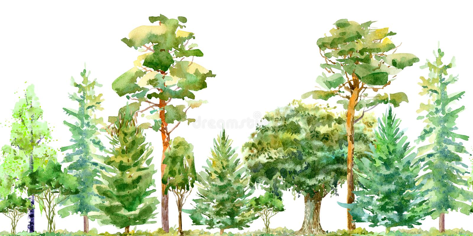 Seamless border of a oak,birch,pine,spruce.Deciduous and conifers tree. stock illustration