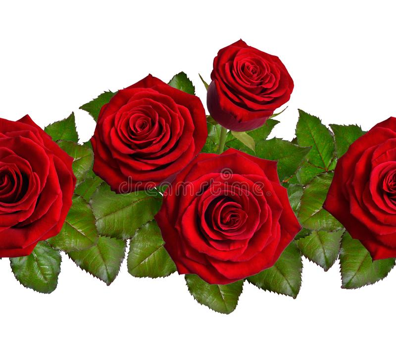 Seamless border with red roses. Isolated on white background. stock images