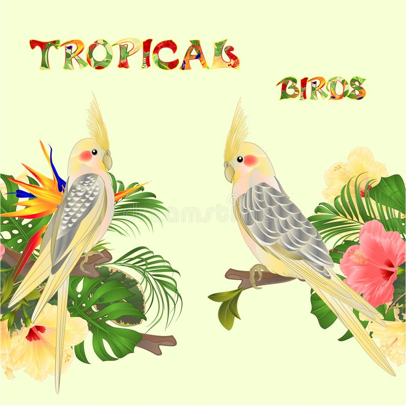Seamless border tropical birds Yellow cockatiels cute funny parrots and tropical flowers pink and yellow hibiscus and Strelitzi stock illustration