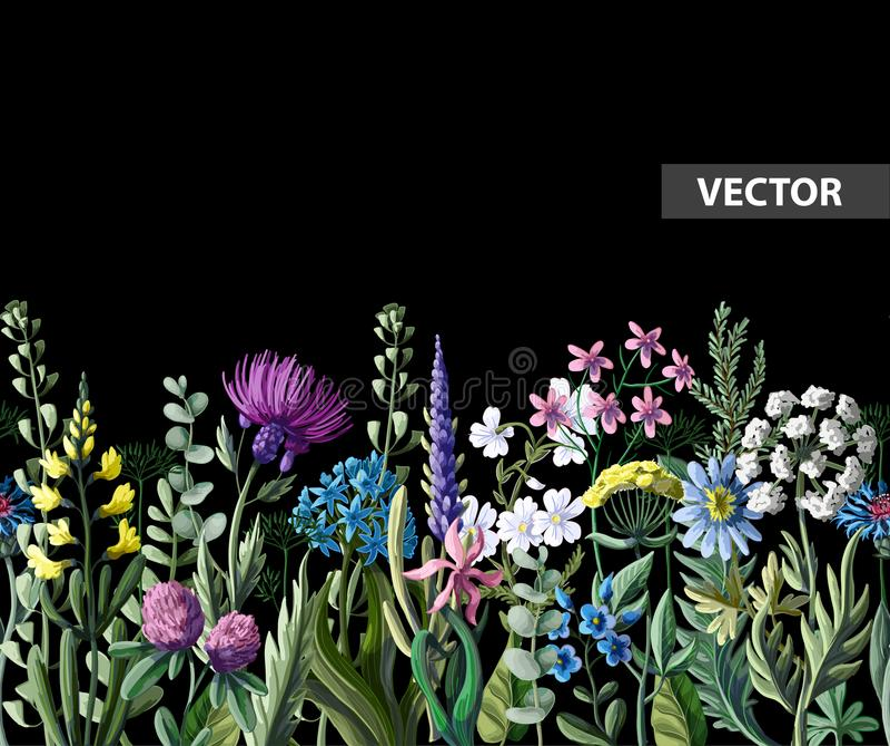 Seamless border of wild flowers. Vector illustration. Seamless border of wild flowers. Vector royalty free illustration