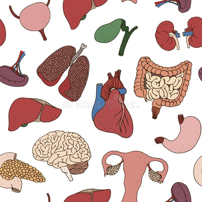 Seamless color human organs pattern royalty free illustration