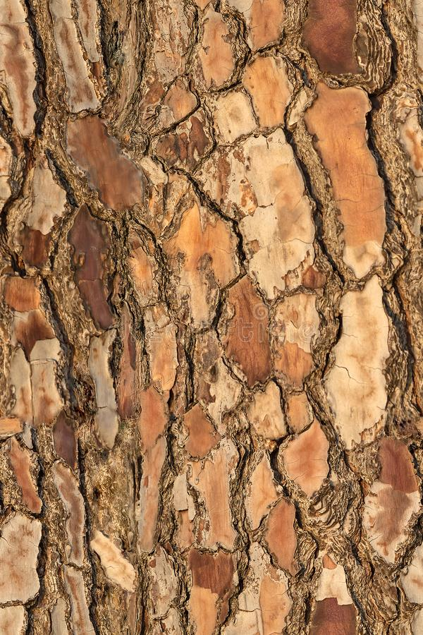 Free Seamless Colorful Pattern Of Bark Pine Texture For Print And Wale Of Fabric Royalty Free Stock Photos - 123369068