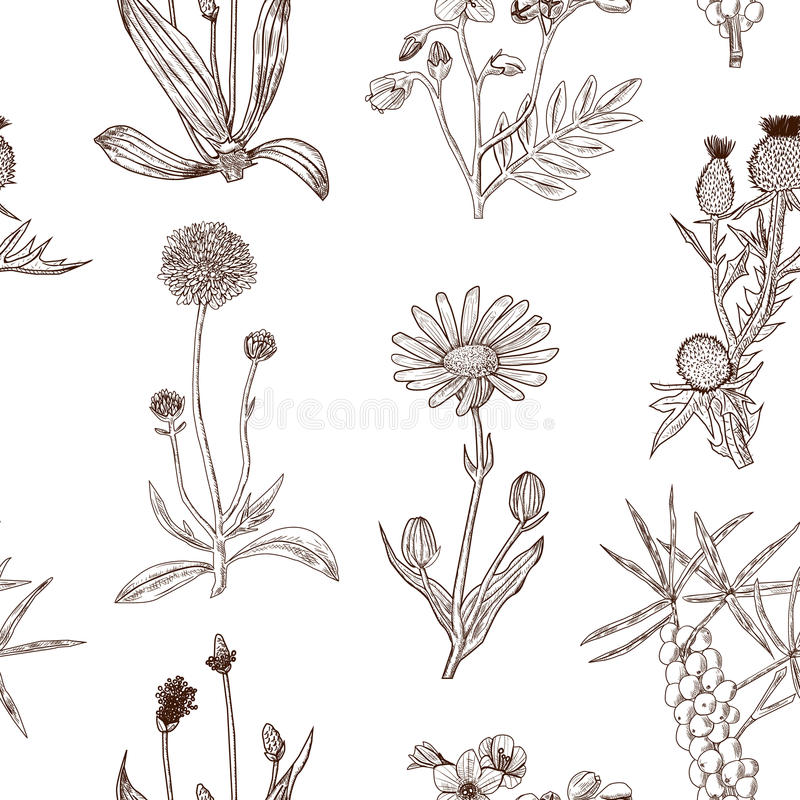 Seamless decorative pattern with herbs. royalty free stock photo