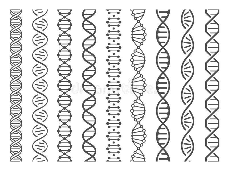 Seamless DNA spiral. Adn helix structure, genomic model and human genetics code pattern vector illustration set royalty free illustration