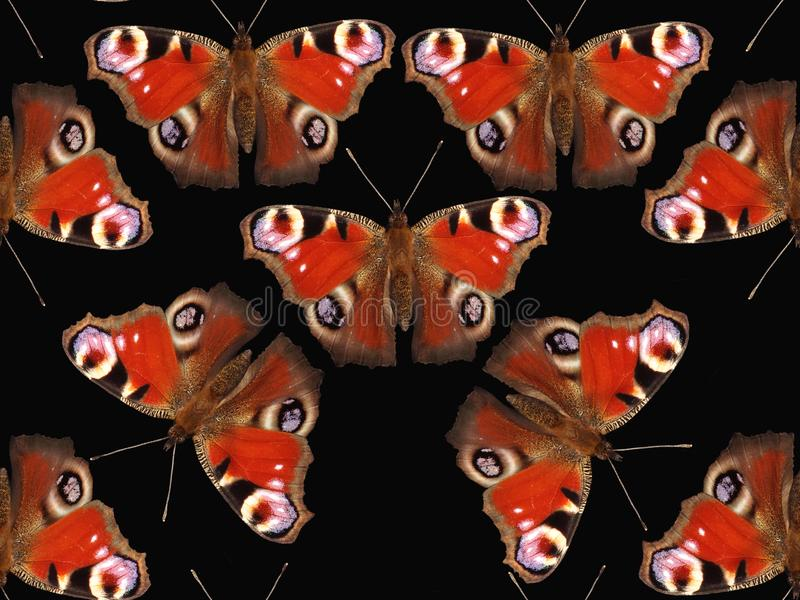 seamless fjärilsmodell royaltyfria bilder