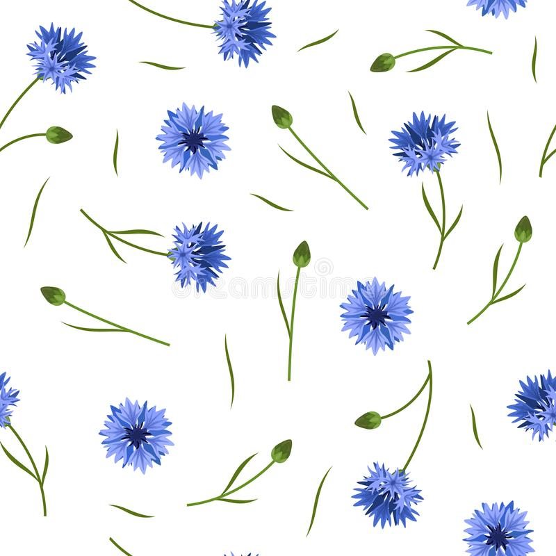 Seamless floral pattern with blue corn flowers on white background royalty free illustration