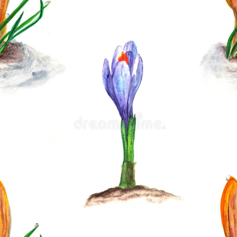 Seamless floral pattern. Watercolor illustration of crocus spring flower royalty free illustration