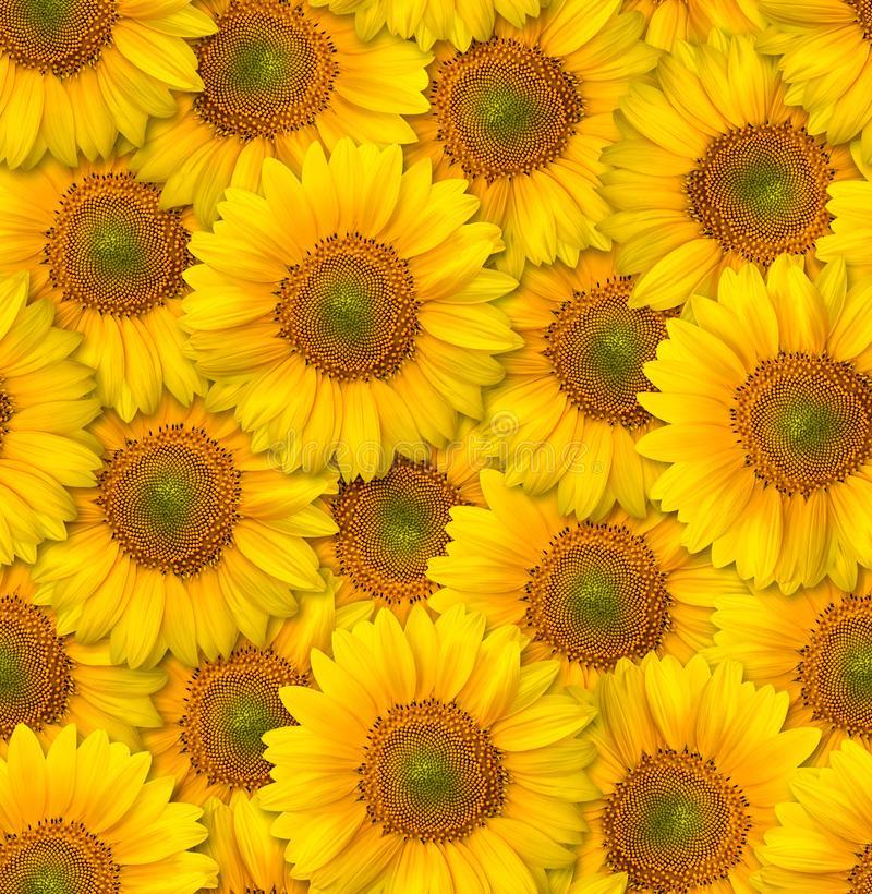 Seamless floral pattern. Chaotic arrangement of flowers. Decorative orange sunflower. stock image