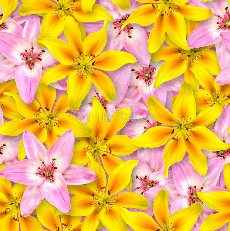 Seamless floral pattern. Chaotic arrangement of flowers. Pink and yellow lily flower on a bright pink background. Spring-summer style royalty free stock photography