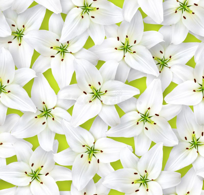 Seamless floral pattern. Chaotic arrangement of flowers. White lily flower on a light green background. Spring-summer style stock photo