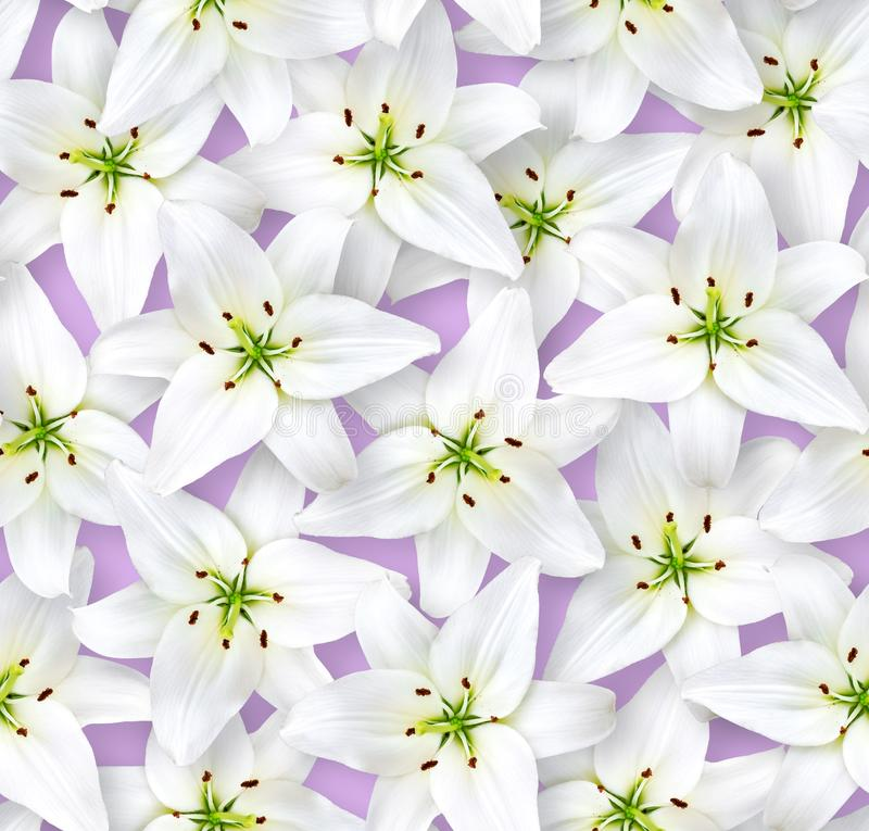 Seamless floral pattern. Chaotic arrangement of flowers. White lily flower on a lilac background royalty free stock photos