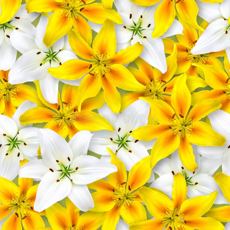 Seamless floral pattern. Chaotic arrangement of flowers. White and yellow lily flower on a light green background stock photos