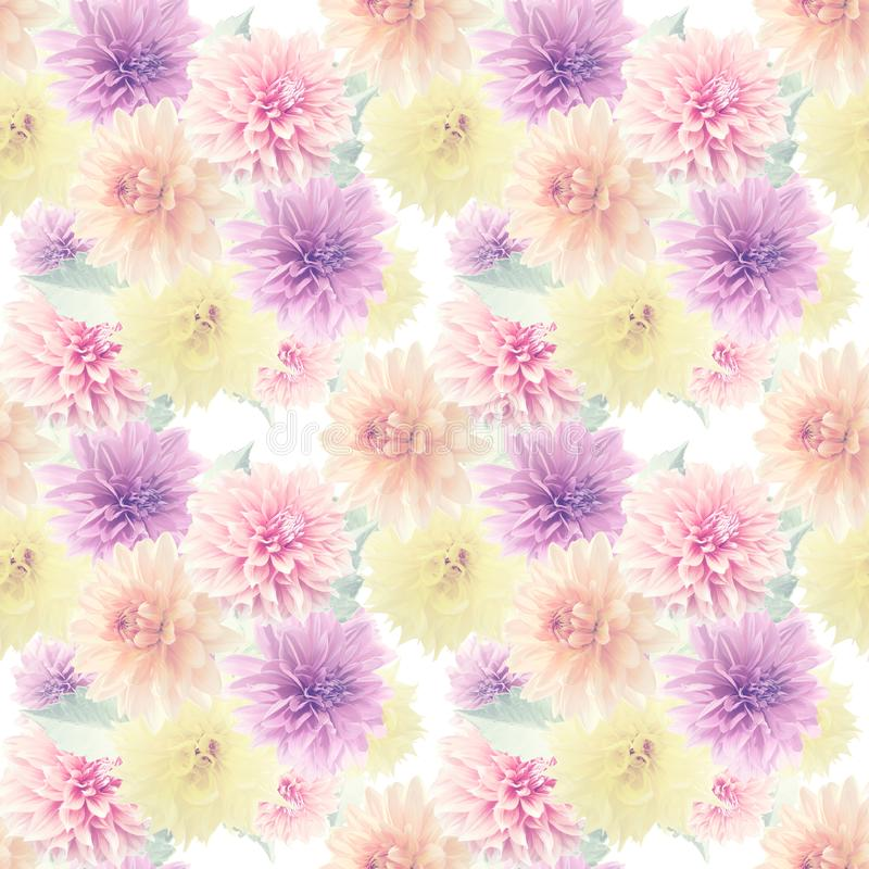 Seamless floral pattern with dahlia flowers royalty free illustration