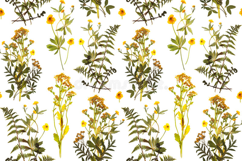 Seamless floral pattern with herbs, yellow flowers stock illustration