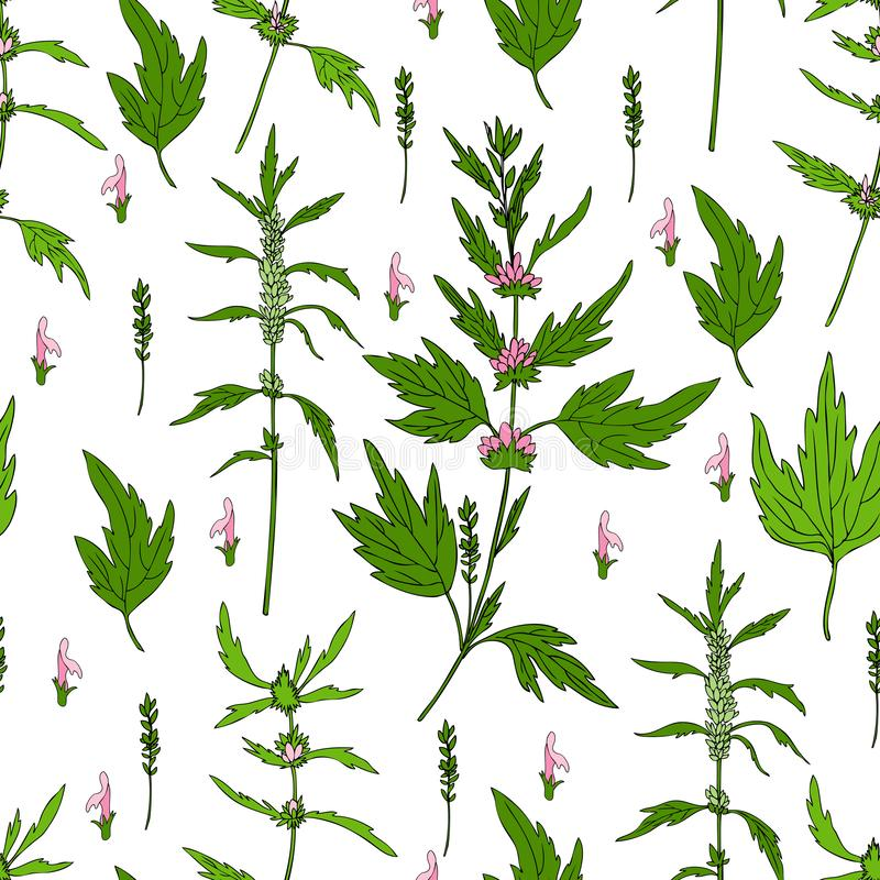 Seamless floral pattern Motherwort flower hand drawn vector isolated on white background, herbal medical sedative plant vector illustration