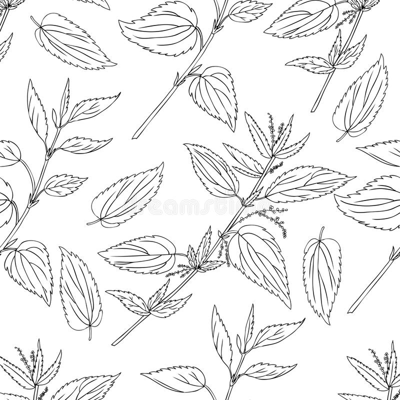 Seamless floral pattern, Nettle wild field flower isolated on white background, hand drawn sketch vector doodle, line royalty free illustration