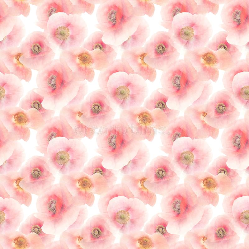 Seamless floral pattern. Seamless pattern of Poppy Flowers royalty free stock photo