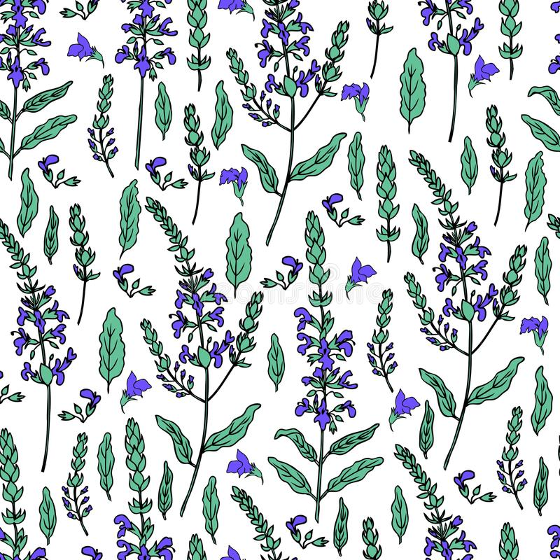 Seamless floral pattern Sage flower, bud, leaves vector isolated on white background, Hand drawn healing herb, colorful vector illustration