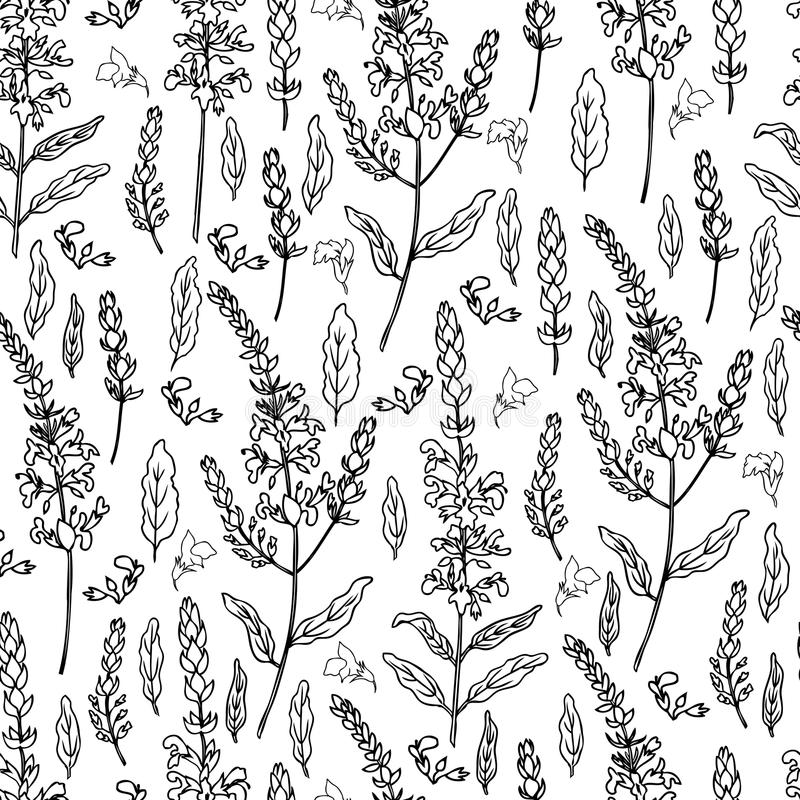 Seamless floral pattern Sage flower, bud, leaves vector isolated on white background, Hand drawn healing herb, line art stock illustration