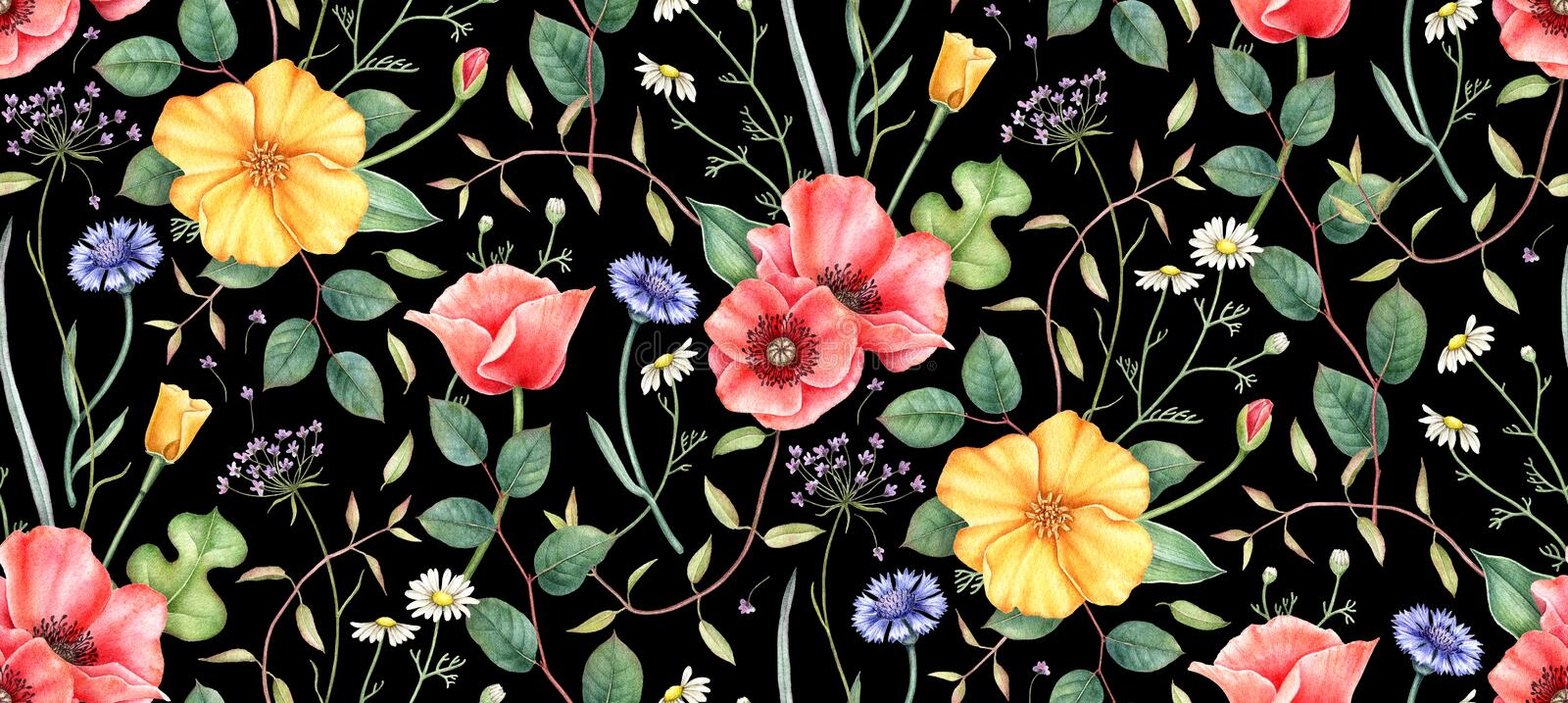 Seamless floral pattern with wildflowers on black background. Hand drawn watercolor illustration. royalty free illustration