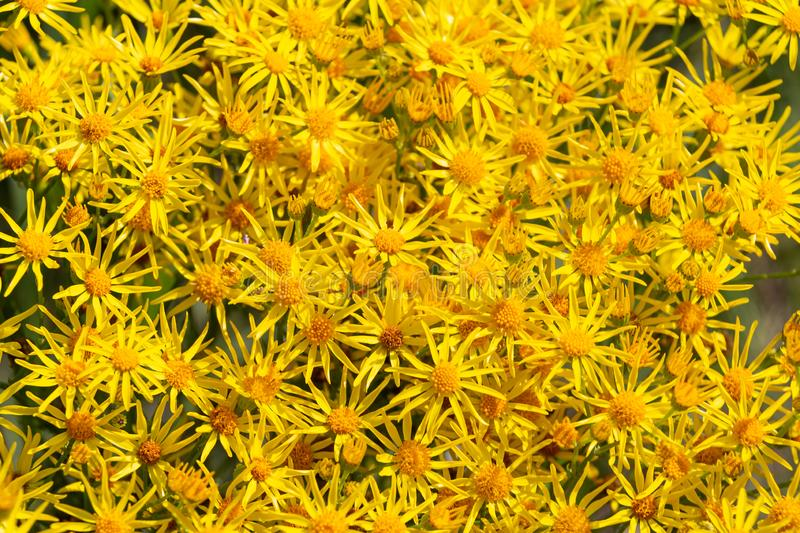 Seamless floral pattern with yellow flowers royalty free stock photos