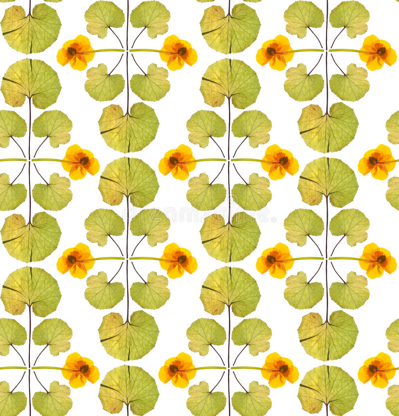 Seamless floral pattern with yellow flowers stock image