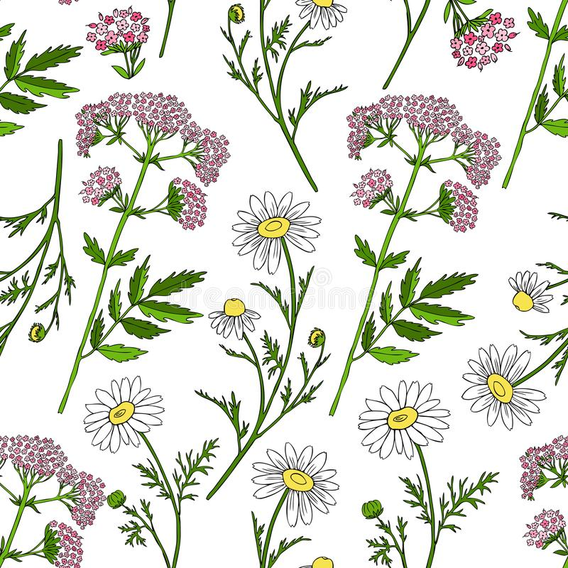 Seamless floral vector pattern, Chamomile wild field flower, Valeriana officinalis on white background, hand stock illustration