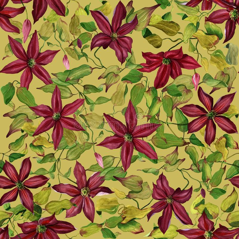 Seamless flower pattern with burgundy watercolor clematises on green olive background vector illustration