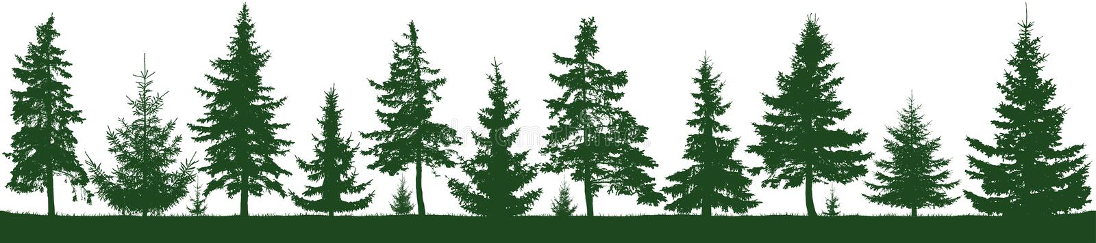 Seamless forest fir trees silhouette. Parkland, park, garden. Isolated, separate objects. Coniferous green spruce. Christmas tree, cedar, fir-tree, pine, pine vector illustration