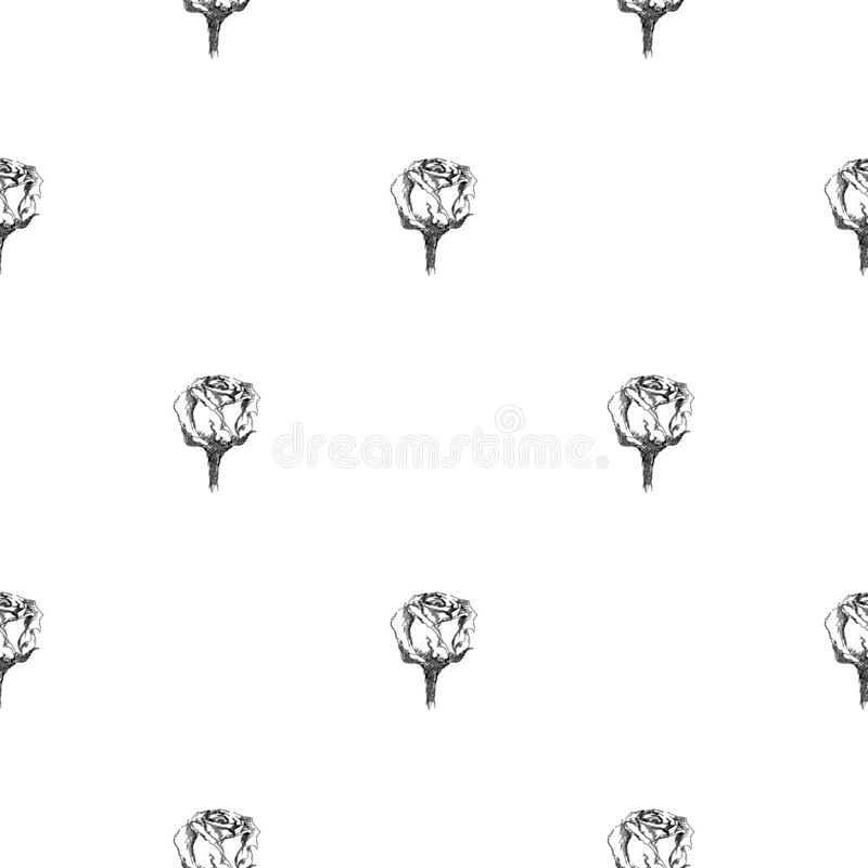 Seamless freehand pattern of abstract rose flowers isolated on white background. Vector floral illustration. Cute doodle modern. Seamless hand drawn pattern of stock illustration