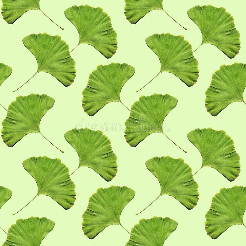 Seamless ginkgo leaf pattern wallpaper. Ginkgo leaf seamless pattern wallpaper for your next project royalty free stock images