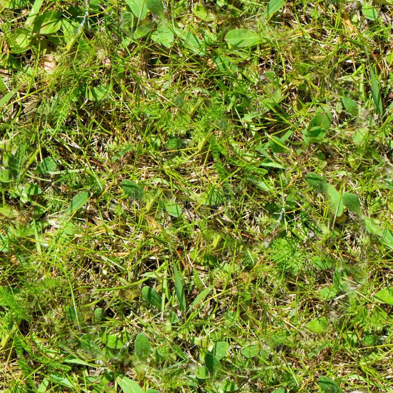 Seamless grass. Fresh green grass moss floor garden texture background stock photography