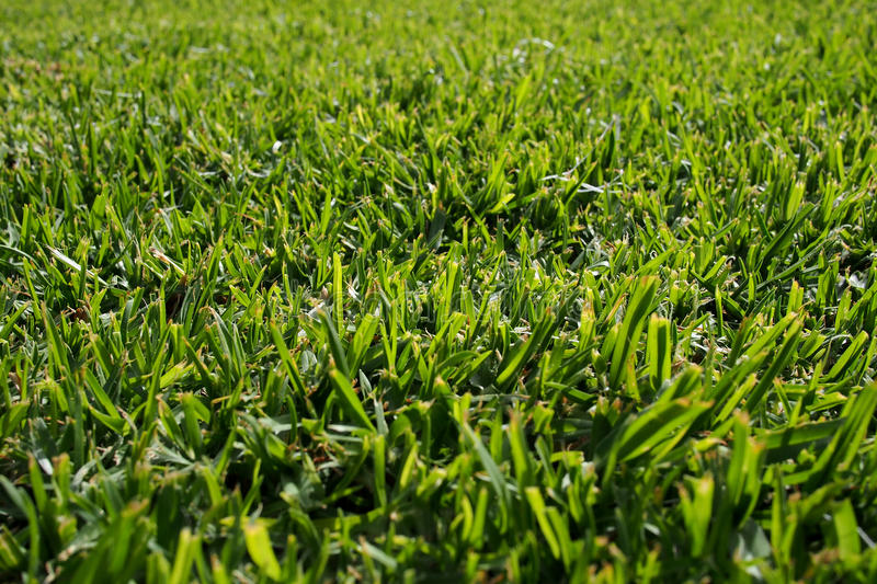 Download Seamless Green Grass Background Stock Image - Image: 32455513