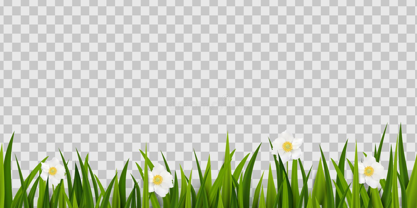 Seamless green grass, spring flowers border isolated on transparent background. Easter greeting card decoration element royalty free illustration