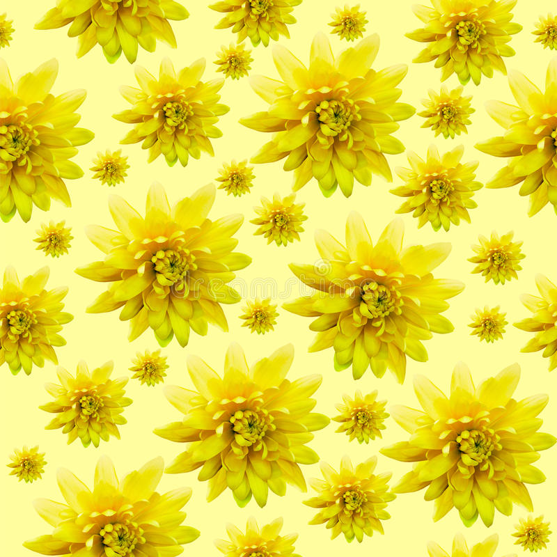 Seamless infinite yellow floral background. For design and printing. Background of natural chrysanthemums. Nature stock images