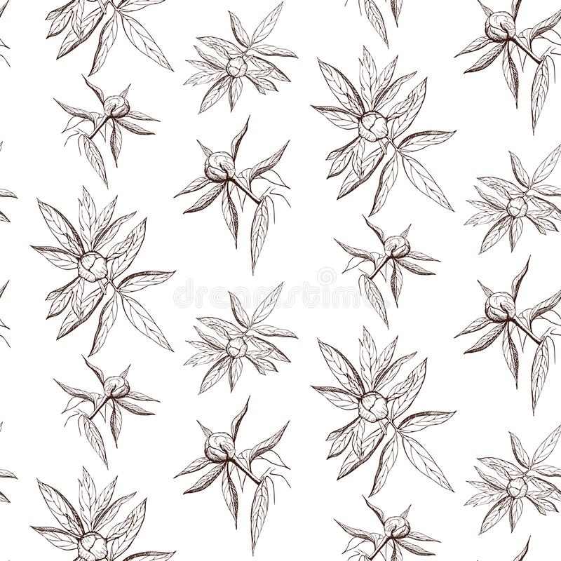 Seamless ink peony flower pattern on white backdrop. Engraved vintage peony wallpaper. elegant black and white peony illustration. Vector pattern of free hand stock illustration
