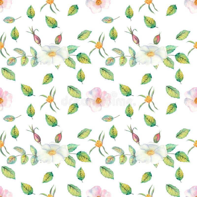 seamless modell Blommor och frukter av den rosa höftvattenfärgen Blommaillustrationer Bohemiska buketter av blommor, kransar, brö vektor illustrationer