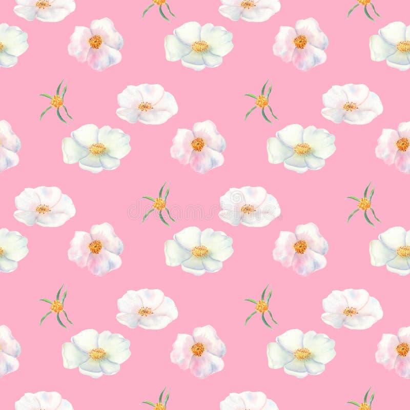 seamless modell Blommor och frukter av den rosa höftvattenfärgen Blommaillustrationer Bohemiska buketter av blommor, kransar, brö stock illustrationer