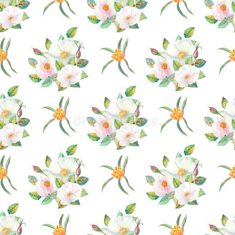 seamless modell Blommor och frukter av den rosa höftvattenfärgen Blommaillustrationer Bohemiska buketter av blommor, kransar, brö royaltyfri illustrationer